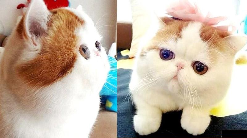 Самый милый котик