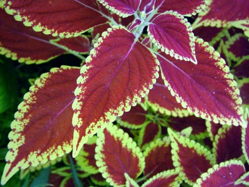 Осенние хлопоты с комнатными растениями